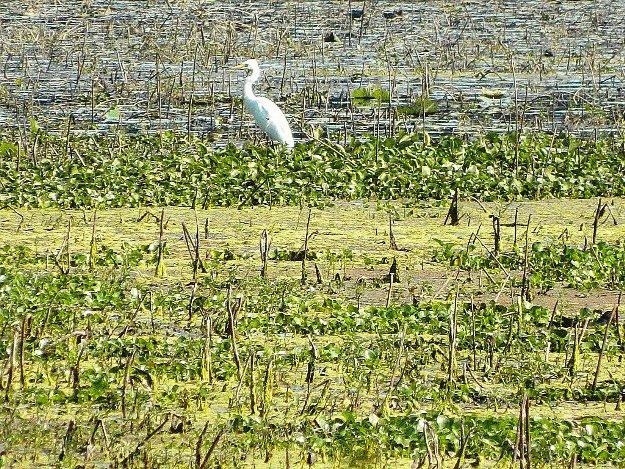 Nawabganj bird sanctuary, Unnao, Photograph Courtesy: Yoc2007/Wikimedia Commons