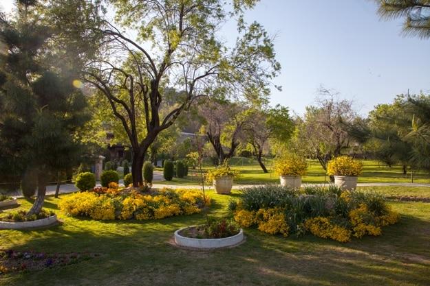 Springtime at Badamwari Garden, Srinagar