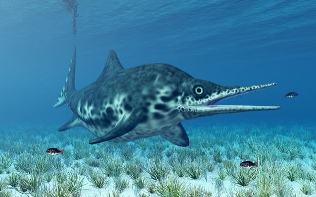 Ichthyosaur Shonisaurus Computer generated 3D illustration