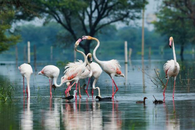 Keoladeo National Park near Fatehpur Sikri