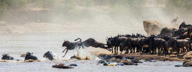 Maasai Mara photo 2