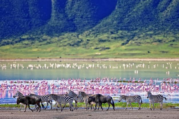 Maasai Mara National Reserve: 5 Reasons to Visit This Amazing Wildlife Game Reserve in Kenya