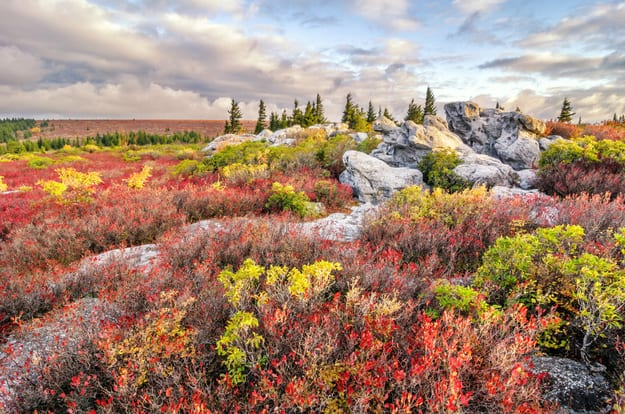 Morning light over autumn foliage at Bear Rocks Preserve in West Virginia's Dolly Sods