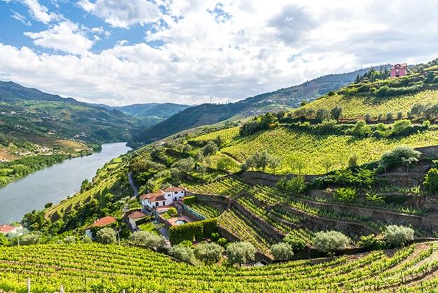 Portugal - vineyard