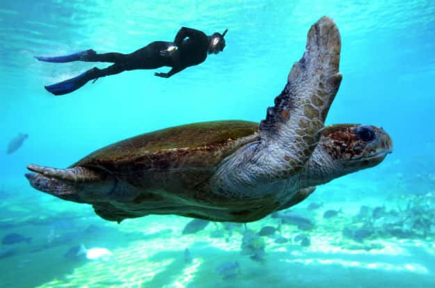 Snorkeling with Sea Turtle in Great Barrier Reef photo