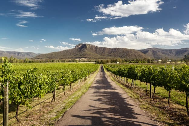 View of Hunter Valley vineyards