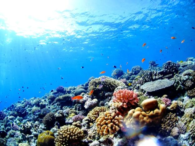 underwater scape of okinawa