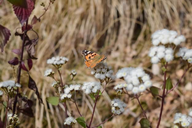 A colourful butterfly sitting on small flower in forest of Binsar wildlife sanctuary