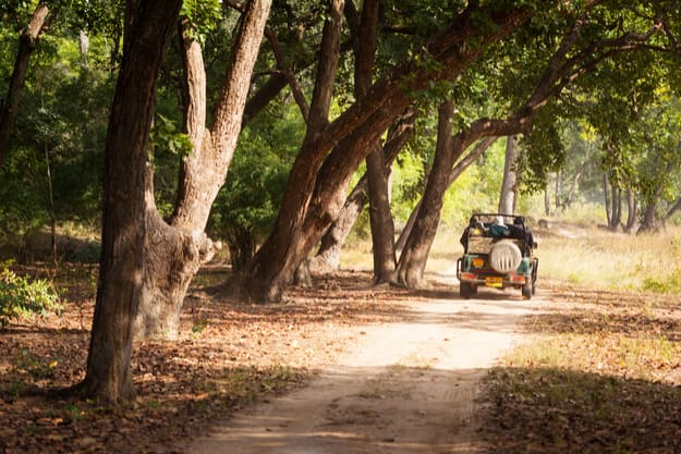A safari jeep on a trail through forest in Bandhavgarh National Park in Madhya Pradesh. The park is a popular tourist destination with opportunities to spot tigers.