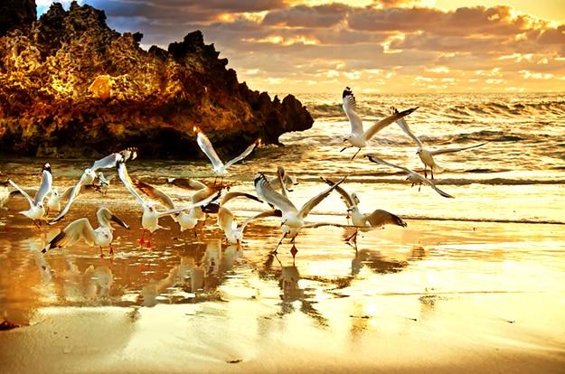 Australia Perth sunset photo