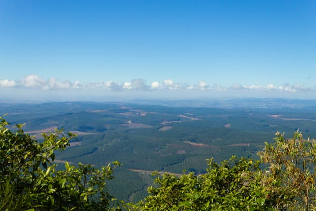 Blyde River Canyon panorama from God's window viewpoint. Mpumalanga region landscape, South Africa