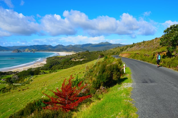 Coastal Path in Great Barrier Island, New Zealand