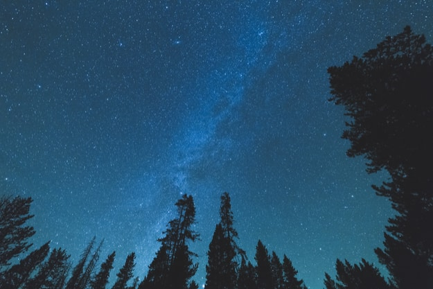 Milky Way in night sky over tall trees in forest