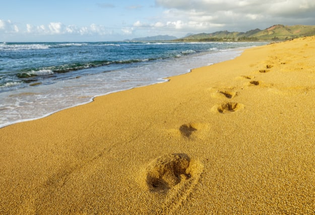 Sand beach with foot prints, shining golden in the morning sun, Kapaa