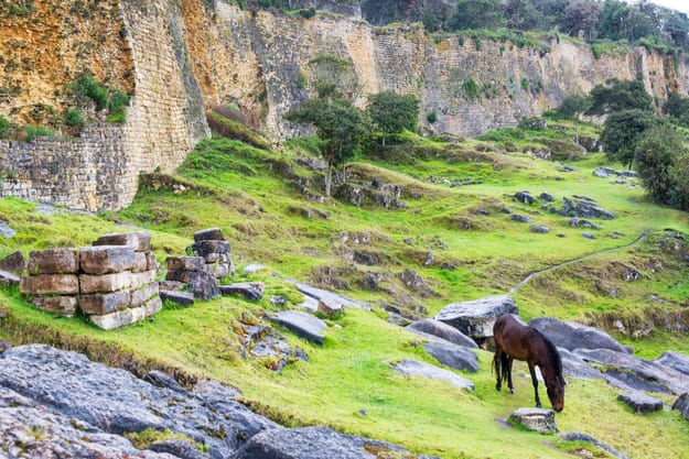 Horse grazing in front of the ancient walls of the fortress city of Kuelap, Peru