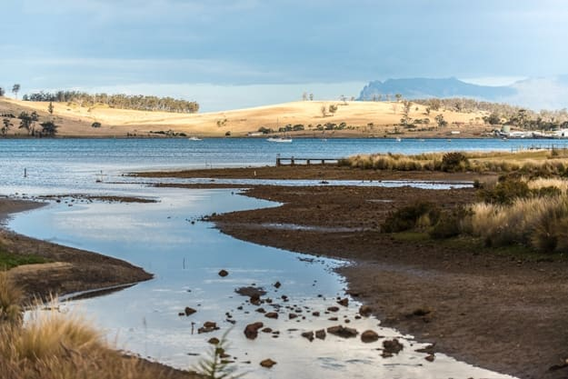 Rarest Fish in the World Found Off Tasmanian Coast