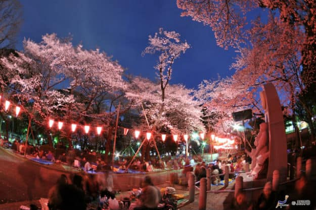 Cherry blossoms at night in Tokyo 2