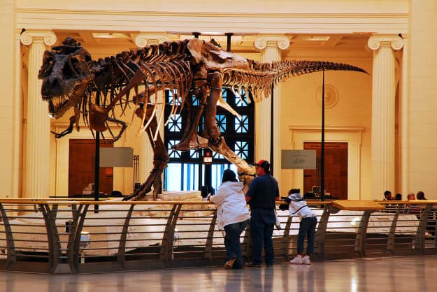 World's largest T-Rex Sue in Chicago Field Museum