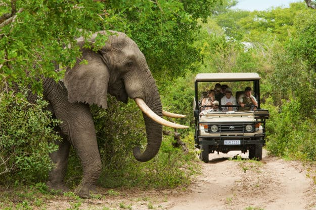 Elephant-Walking-Kruger-highres