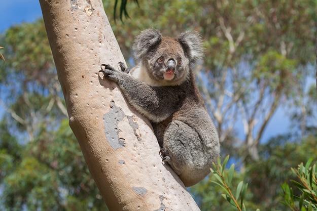 Kangaroo Island South Australia photo 11