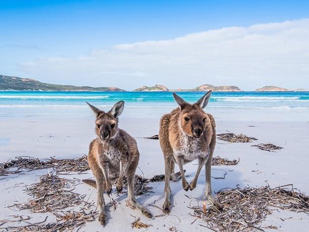 Kangaroo Island South Australia photo 15