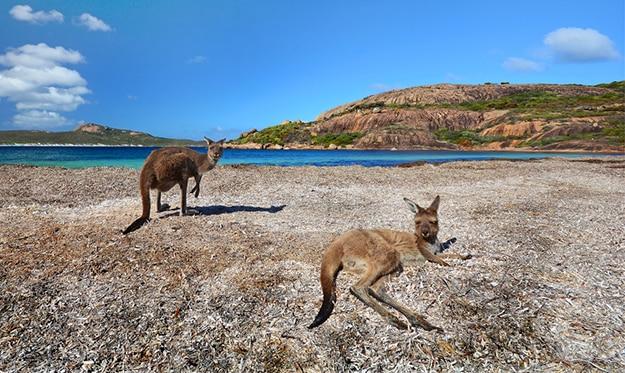 Kangaroo Island South Australia photo 9