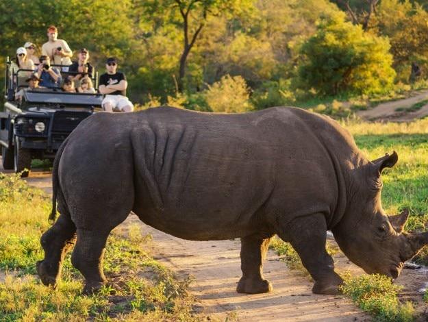 Safari-Rhino
