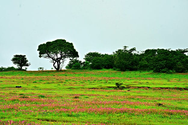 Satara Photos: Beautiful Images That Justify the Glory of Maharashtra's Best Offbeat Spot