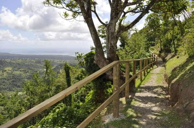 Walking along a pathway with the rainforests of St. Lucia surrounding you