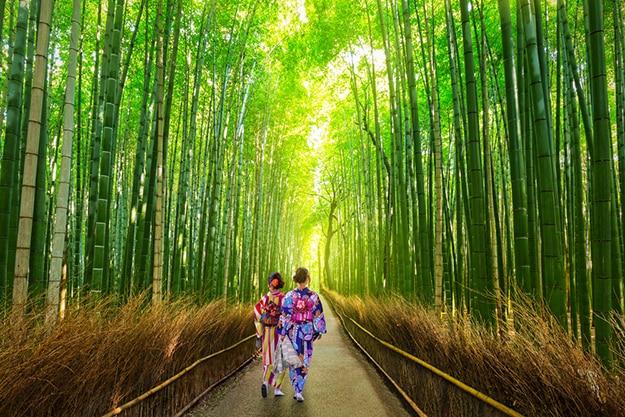 Arashiyama bamboo forest photo 1