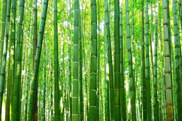 Arashiyama bamboo forest photo 11