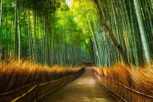 Arashiyama bamboo forest photo 5
