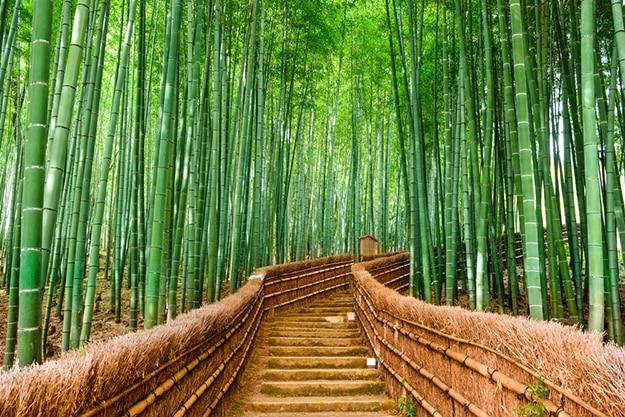 Arashiyama bamboo forest photo 6