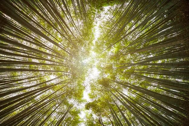 Arashiyama bamboo forest photo 7