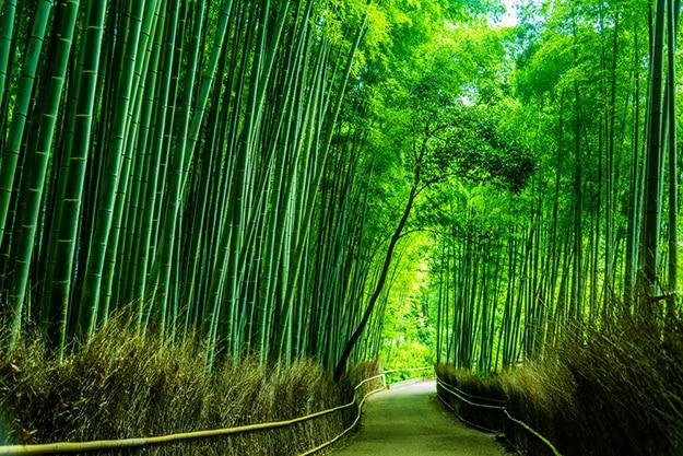 Arashiyama bamboo forest photo 8