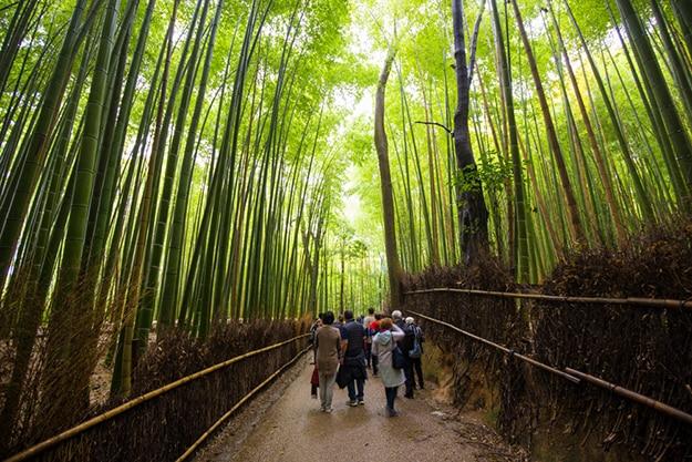 Arashiyama bamboo forest photo 9