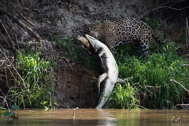 Photos of Pantanal in Brazil Show Why it's Every Wildlife Lover's Fantasy