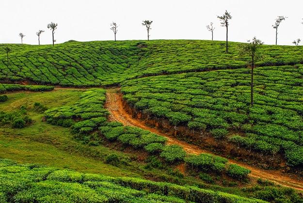 Periyar Kerala photo 9