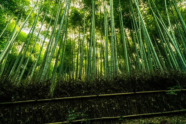 Arashiyama bamboo forest photo 10