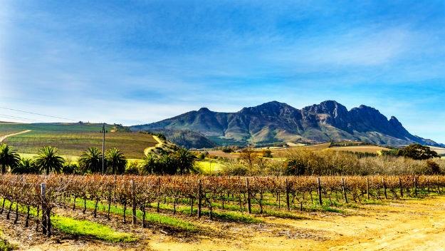 vineyard photo south africa