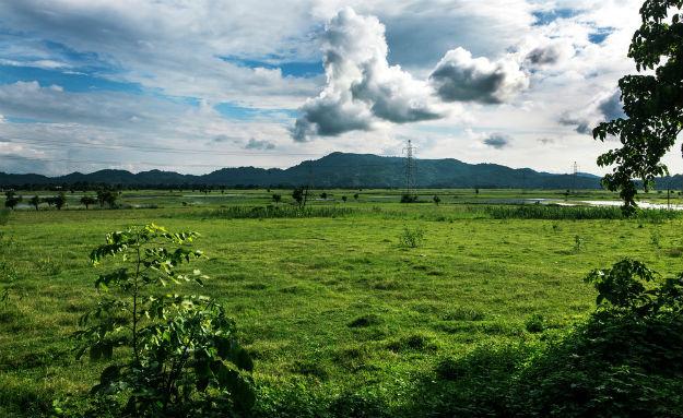 Assam photo 12