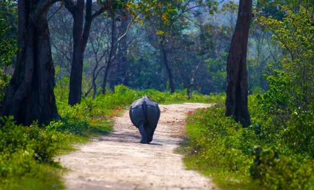 Assam photo 14