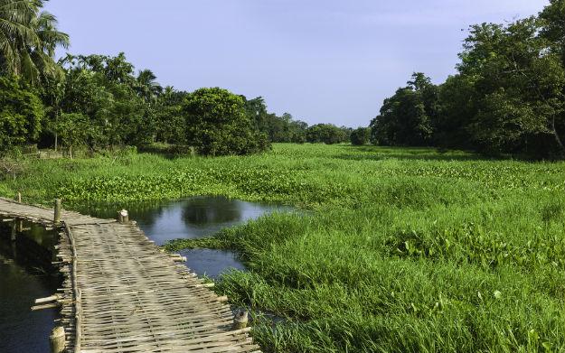 Assam photo 4