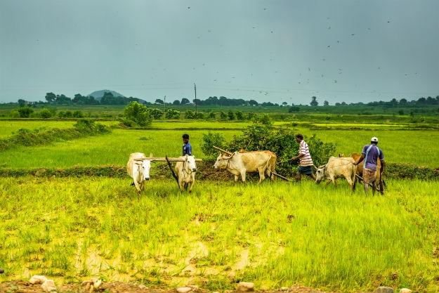 Jharkhand photo 7