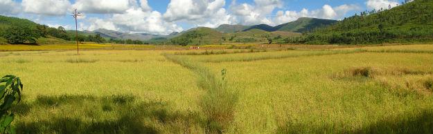 Odisha farm