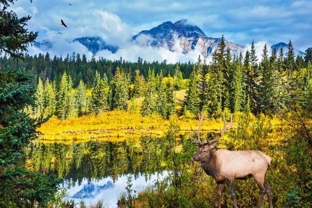 Jasper National Park photo 8