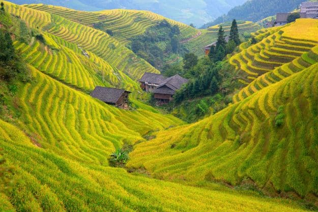 The Longsheng Rice Terraces(Dragon's Backbone) also known as Longji Rice Terraces