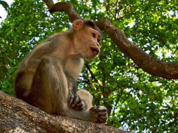 How to Reach Bhagwan Mahavir Wildlife Sanctuary and Mollem National Park by Road, Rail and Flight