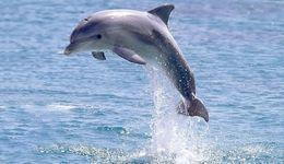 Dolphin trip in Goa