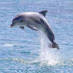 Dolphin trip in Goa - Goa